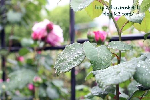 雨の合間に201705-11