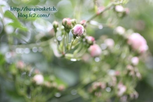雨の合間に201705-13