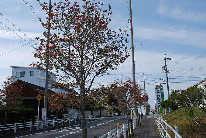 街路樹のハナミズキ