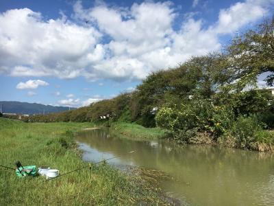 大津市堅田付近は今日も秋晴れ 川はまだ濁りが取れてません(9月14日10時頃)