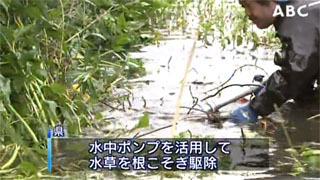 瀬田川のオオバナミズキンバイ駆除