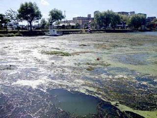 琵琶湖漕艇場に流れ着いた水草