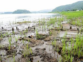 減水で泥底が露出した河口湖大石公園近くの湖岸