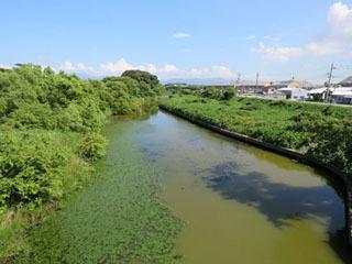 犬上川河口付近