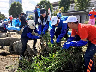学生延べ1500人がオオバナミズキンバイ刈り取り