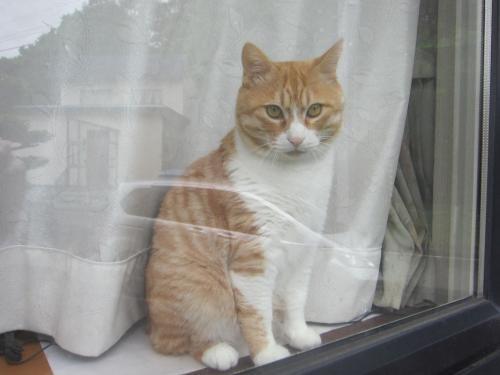 窓辺のぷく