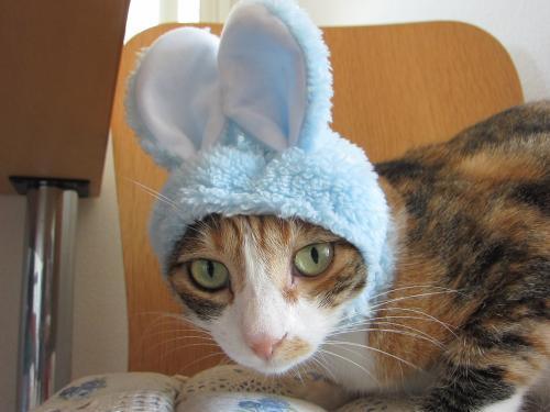 ウサギ小都ちゃん