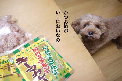 bee-1705miya1.jpg
