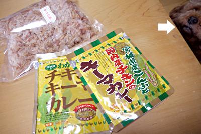bee-1705miya11.jpg