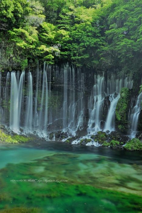 bee-白糸の滝2264
