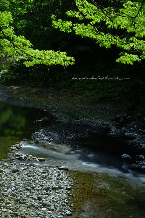 bee-氷川渓谷8768