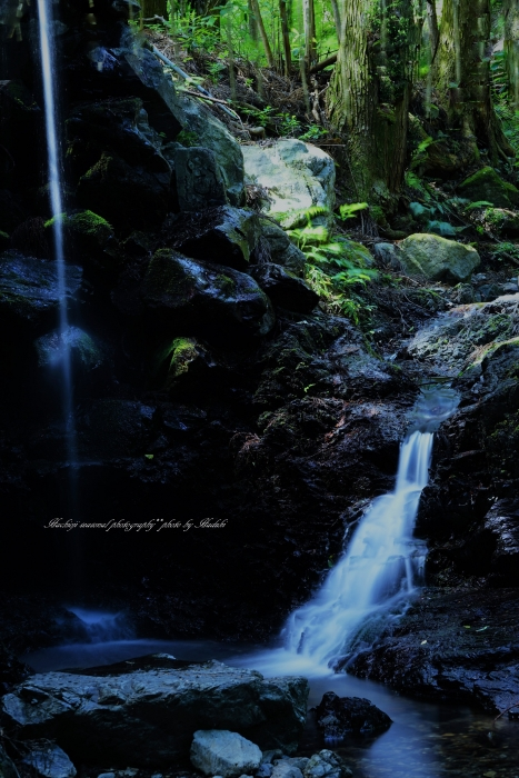 bee-小仏滝9407