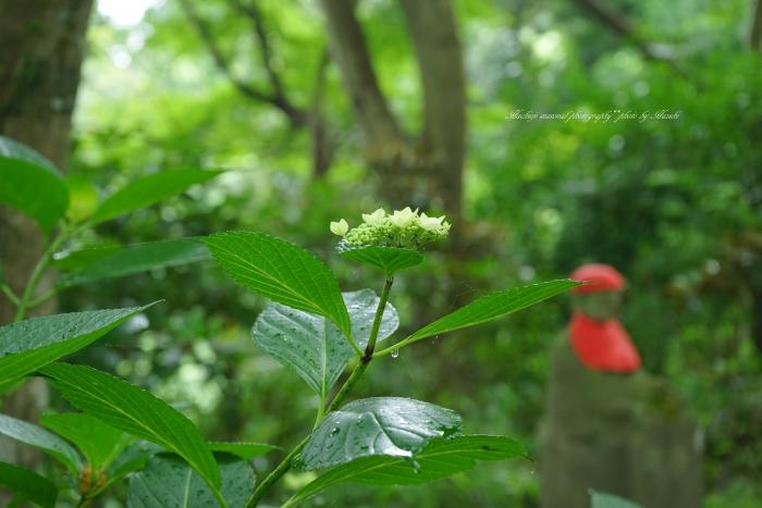 bee-高尾山アジサイ0129