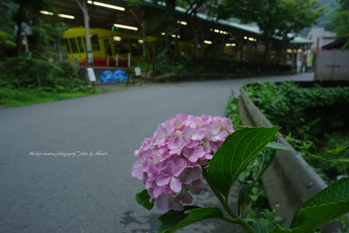 bee-高尾山-六号路0225