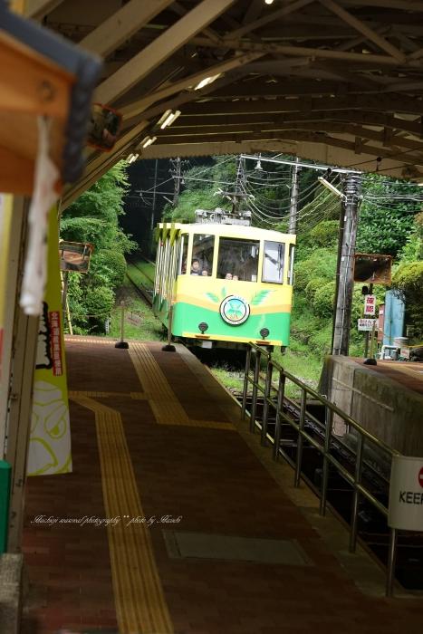 bee-高尾山9703