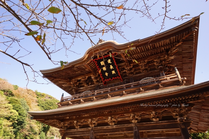 bee-鎌倉9518