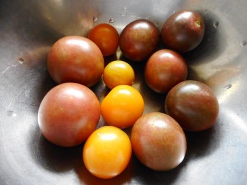 010黒トマト