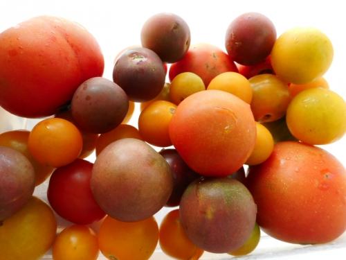 054トマト