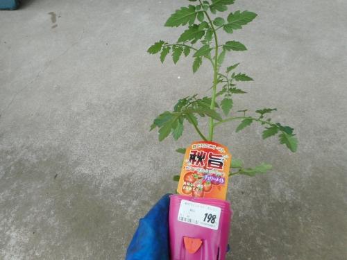 002トマト