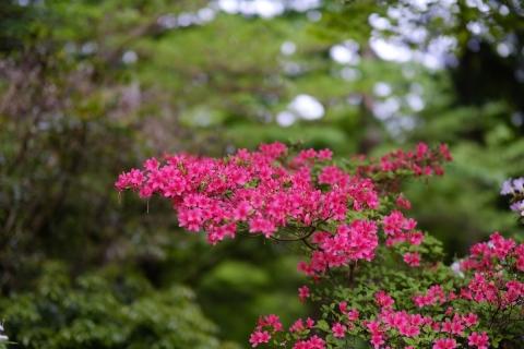 24花月園