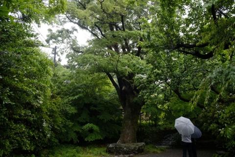 42松永記念館欅と石