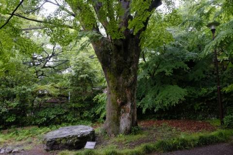 43松永記念館欅と石