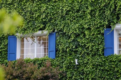 04蔦と青い窓