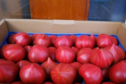 06下北沢トマト