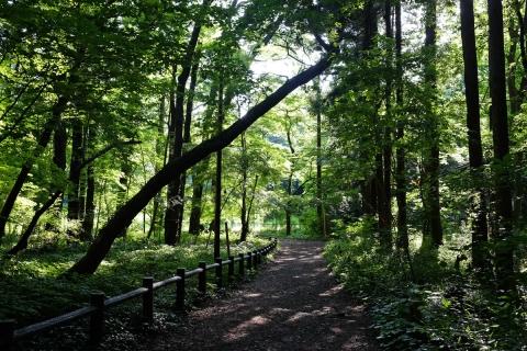 06泉の森