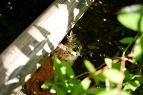 07泉の森ネコ