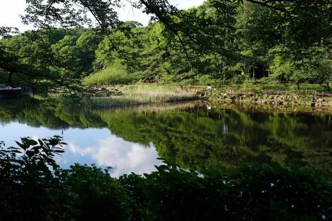 15泉の森池の鏡