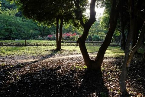 18泉の森影