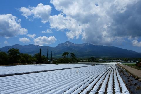 11野辺山の高原野菜畑