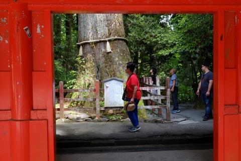 30箱根神社安産杉