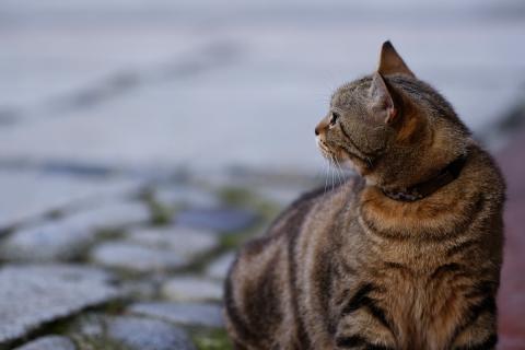 07江の島のネコ