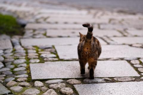 08江の島のネコ