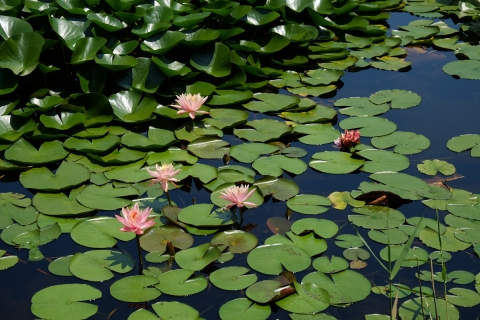 14R115旧道睡蓮の池湖