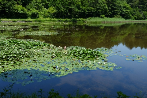 16R115旧道睡蓮の池湖