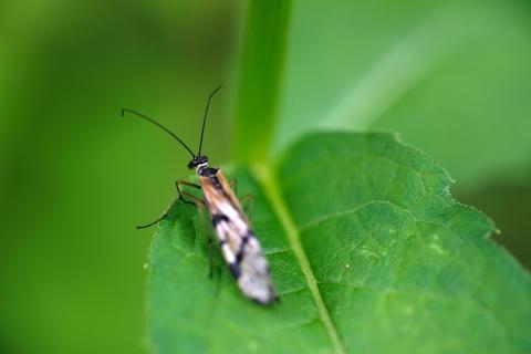 06マクロ虫