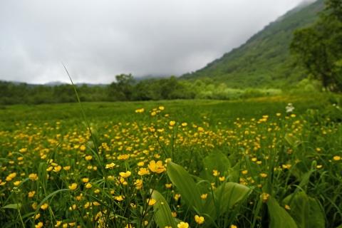 11黄色の花畑