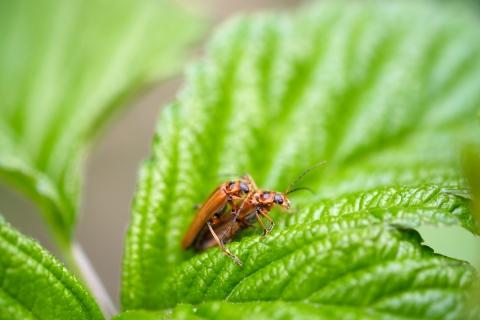 14マクロ虫