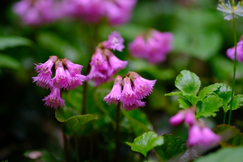18マクロ花