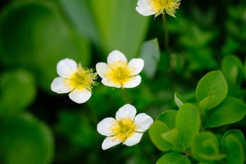 22マクロ花