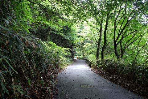16芦ノ湖畔の道