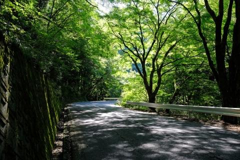 05長尾峠へ林間の道