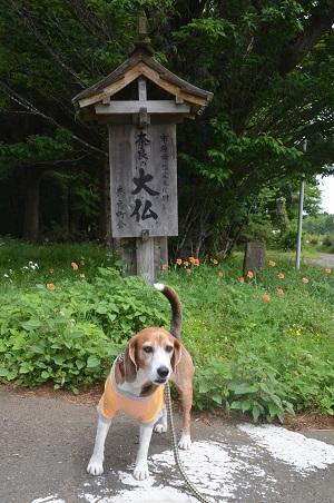 20170509奈良の大仏03