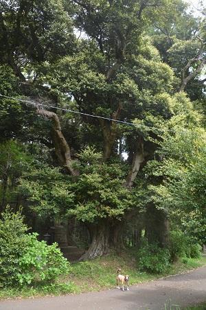 20170509奈良の大仏16