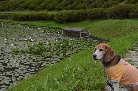20170509熊野の清水公園06