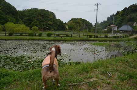 20170509熊野の清水公園04