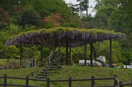20170509熊野の清水公園11